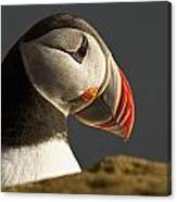Portrait Of A Colorful Puffin Iceland Canvas Print