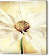 Portrait Of A Daisy Canvas Print
