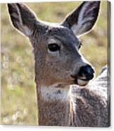 Portrait Of A Deer Canvas Print