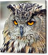 Portrait Of A Great Horned Owl II Canvas Print