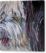 Portrait Of A Happy Shaggy Dog Canvas Print