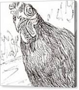 Portrait Of A Little Black Chicken Canvas Print