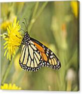 Portrait Of A Monarch Canvas Print