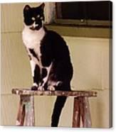 Portrait Of A Painted Cat Canvas Print
