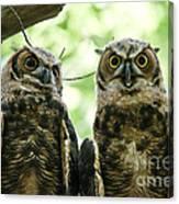Portrait Of A Pair Of Owls Canvas Print