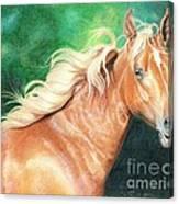 Portrait Of A Palomino Canvas Print