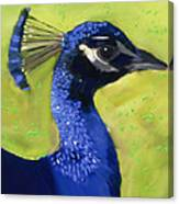 Portrait Of A Peacock Canvas Print