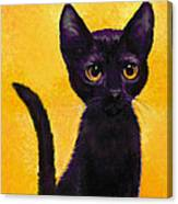 portrait of a small black cat named  LuLu Canvas Print
