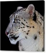 Portrait Of A Snow Leopard Canvas Print