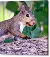 Portrait Of A Squirrel Canvas Print