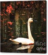Portrait Of A Swan Canvas Print