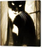 Portrait Of A Tuxedo Cat Iv Canvas Print