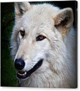 Portrait Of A White Wolf Canvas Print