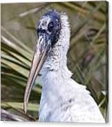 Portrait Of A Woodstork Canvas Print