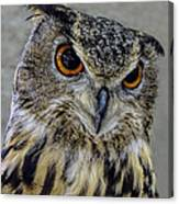 Portrait Of An Owl Canvas Print