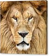 Portrait Of Beautiful African Lion Canvas Print