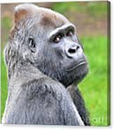 Portrait Of King Kongs Cousin II Canvas Print