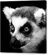 Portrait Of Lemur In Black And White Canvas Print