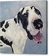 Portrait Of Moose Canvas Print