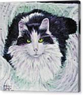 Portrait Of Pj Canvas Print