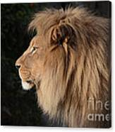 Portrait Of The King Of The Jungle  Canvas Print