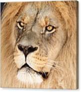 Portrait Of The Lion Canvas Print