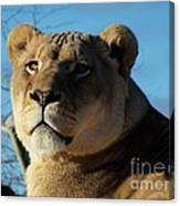 Portrait Of The Mighty Queen Canvas Print