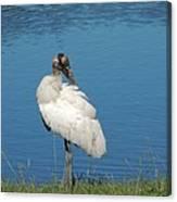 Posing Wood Stork Canvas Print