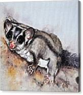 Possum Cute Sugar Glider Canvas Print