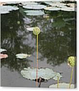 Post Bloom Canvas Print