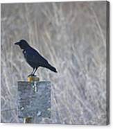 Posted Crow Canvas Print