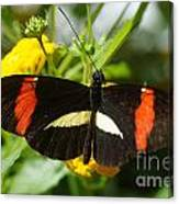 Postman Butterfly 2 Canvas Print
