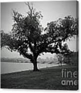 Potomac Tree Canvas Print