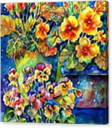 Potted Pansies  Canvas Print