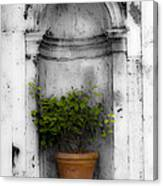 Potted Plant At Villa D'este Near Rome Italy Canvas Print