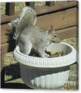 Potted Squirrel Canvas Print