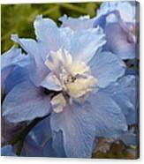 Powder Blue Beauty Canvas Print