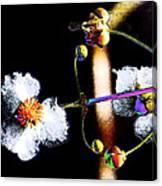 Powder Flower Canvas Print