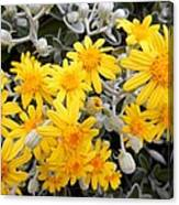 Power Of Yellow Canvas Print