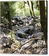 pr 135 - A Very Dry Stream  Canvas Print