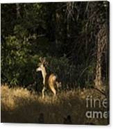 pr 140 -Deer in the Grass Canvas Print
