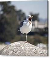 pr 175 - The Tired Seagull Canvas Print