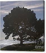 pr 216- Black Oak Canvas Print