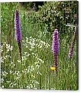 Prairie Blossoms Canvas Print
