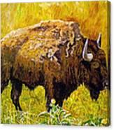 Prairie Companions Canvas Print