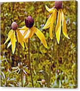 Prairie Coneflowers In Pipestone National Monument-minnesota  Canvas Print