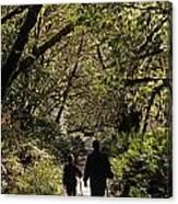 Prairie Creek Redwood State Park With Sun Breaking Through Trees Canvas Print