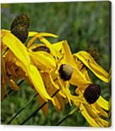 Prairie Flowers In Wind Canvas Print