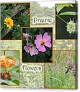 Prairie Flowers Canvas Print