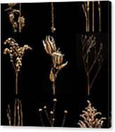 Prairie Plant Still Life Canvas Print